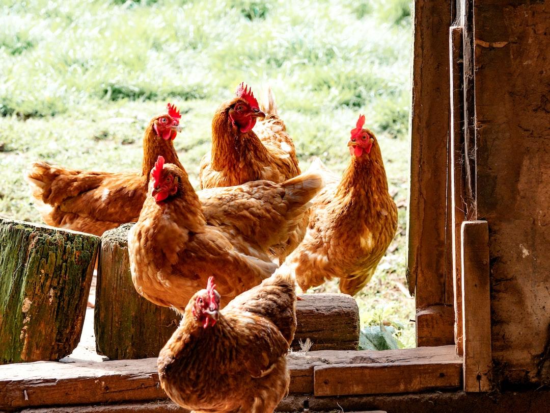 Broiler Chicken Refund Claim Deadline is Near