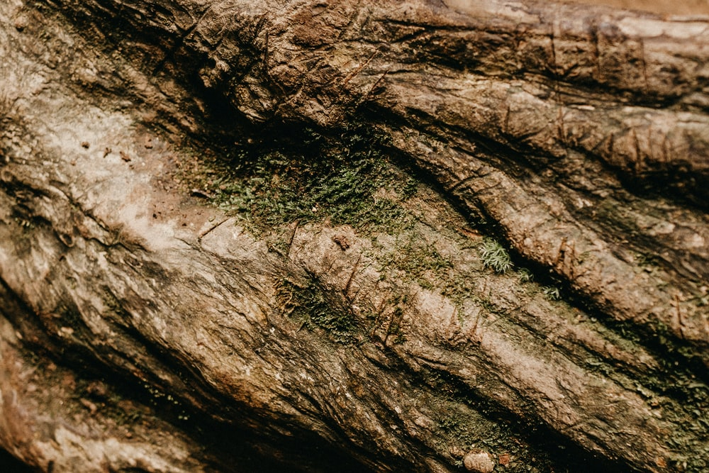 close up photography of brown wood trunk