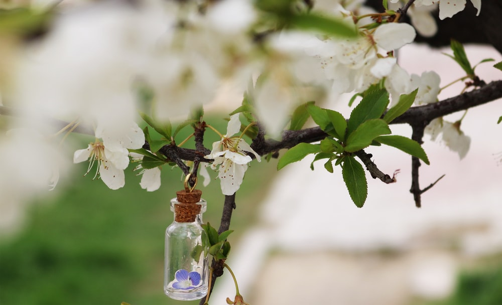 selective focus photography of glass vial on twig
