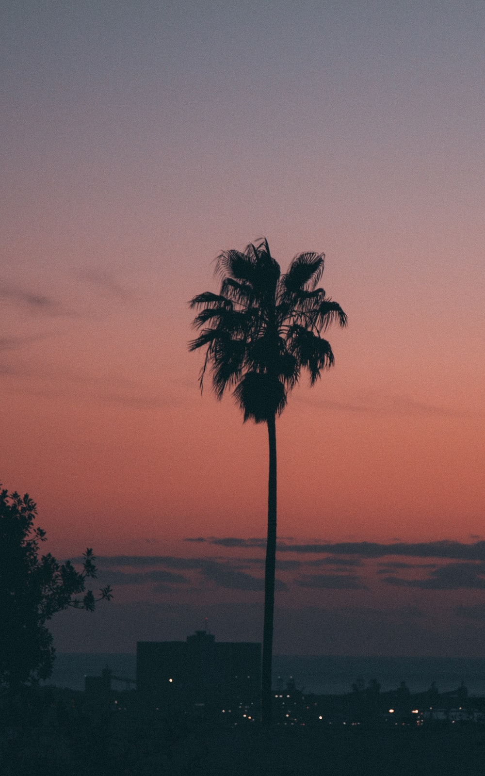 silhouette photography of coconut palm tree