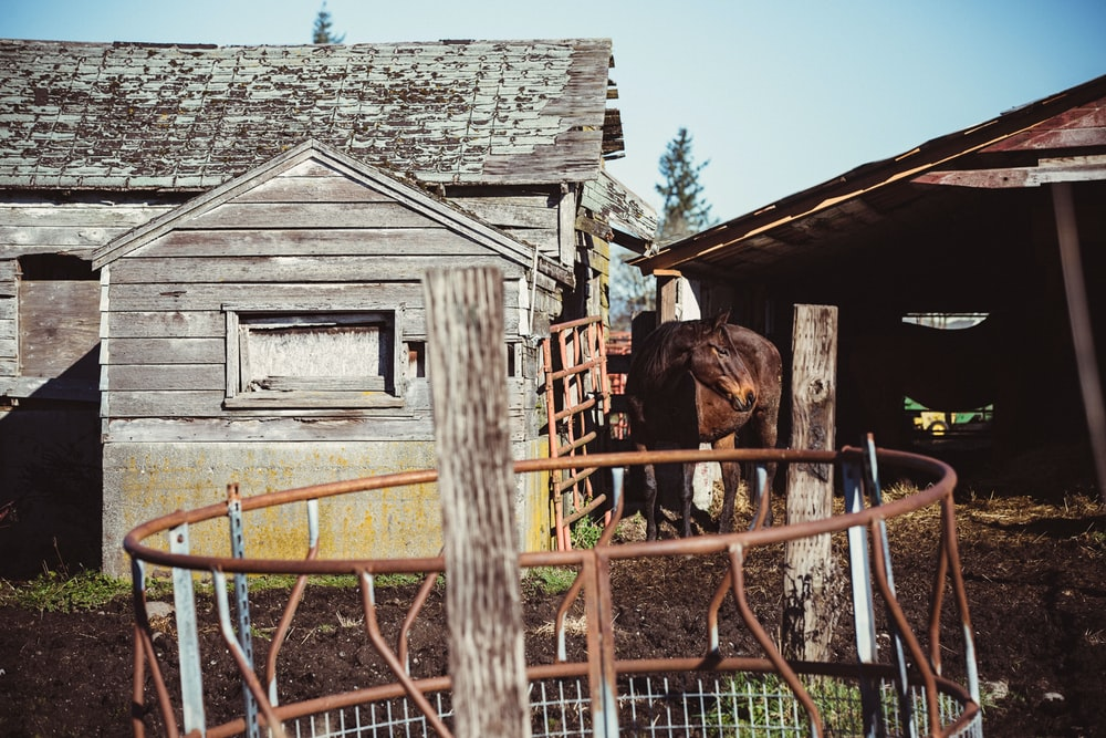 brown horse near brown wooden house