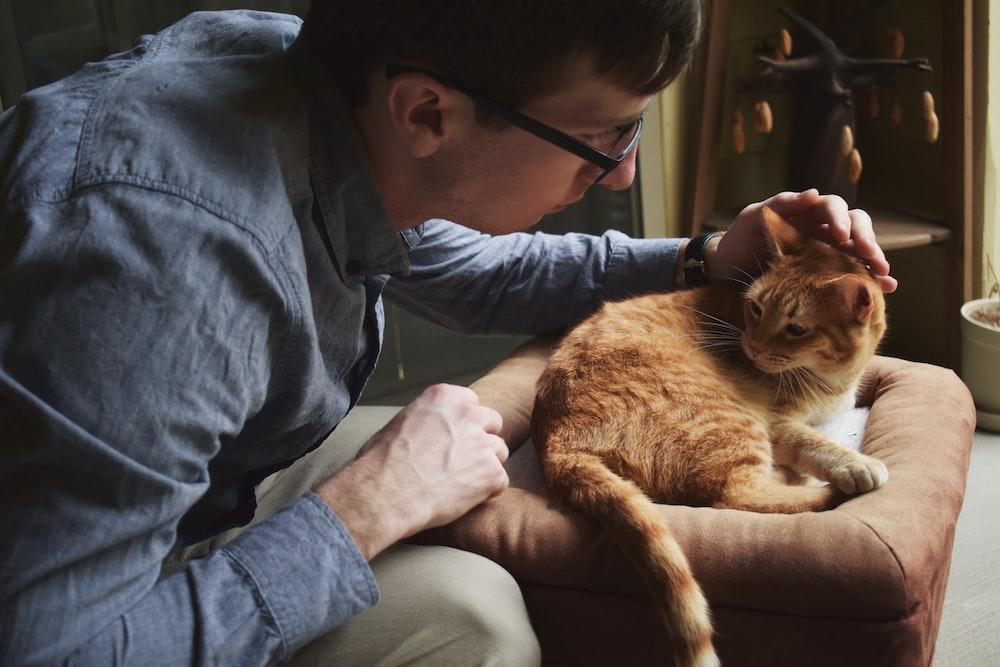 man grabbing cat's head