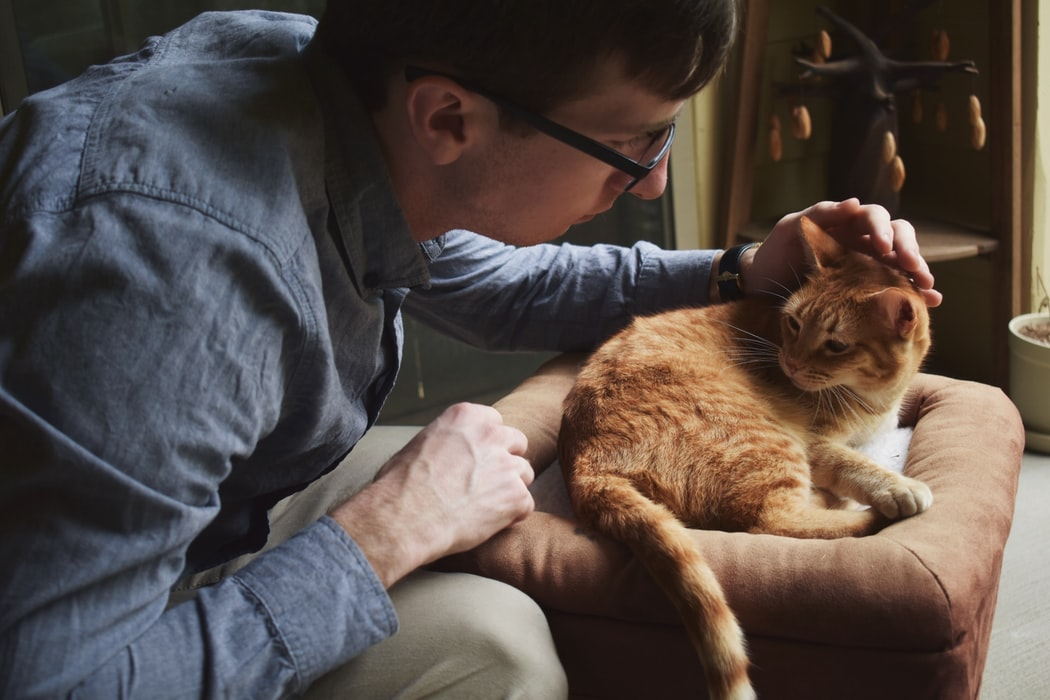 things you should do to get your cat ready for surgery