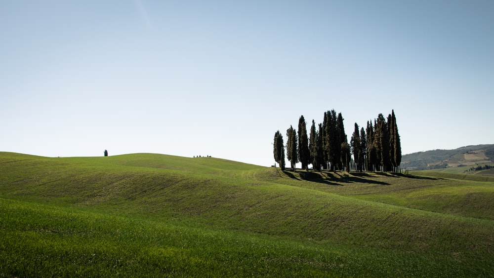 field of trees on hill