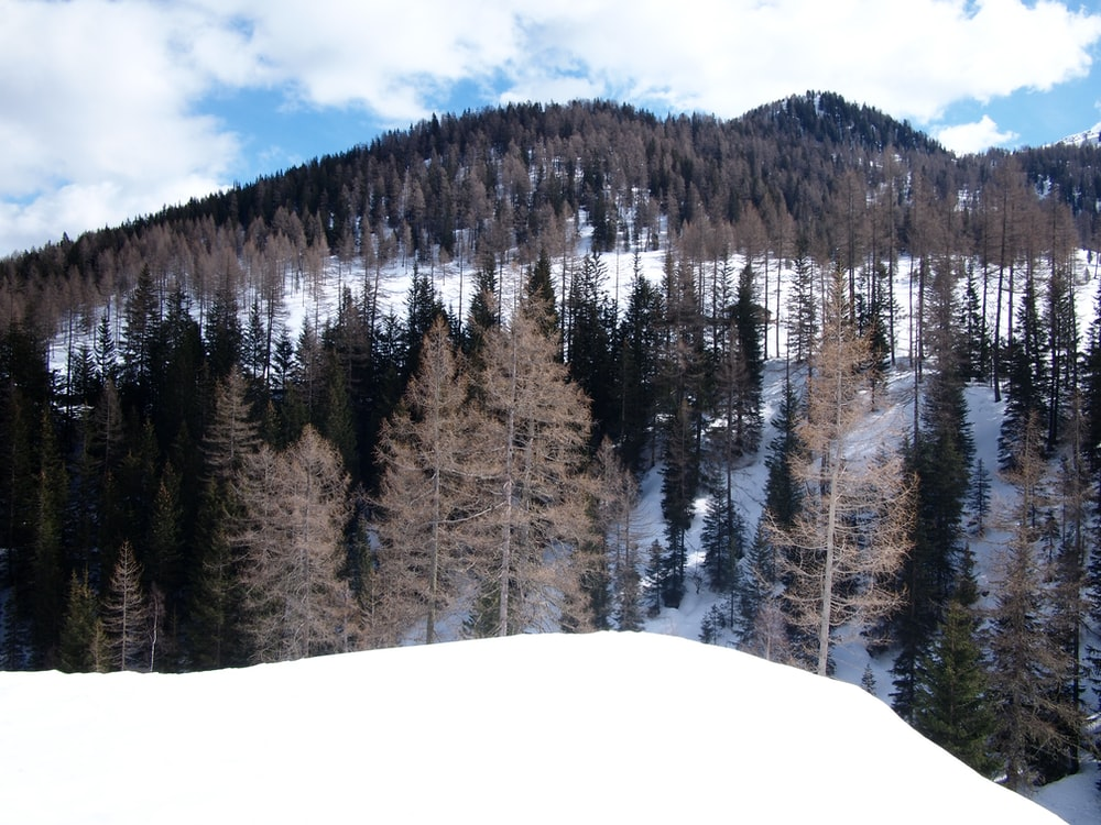 green pine trees on snow-covered mountain during daytime