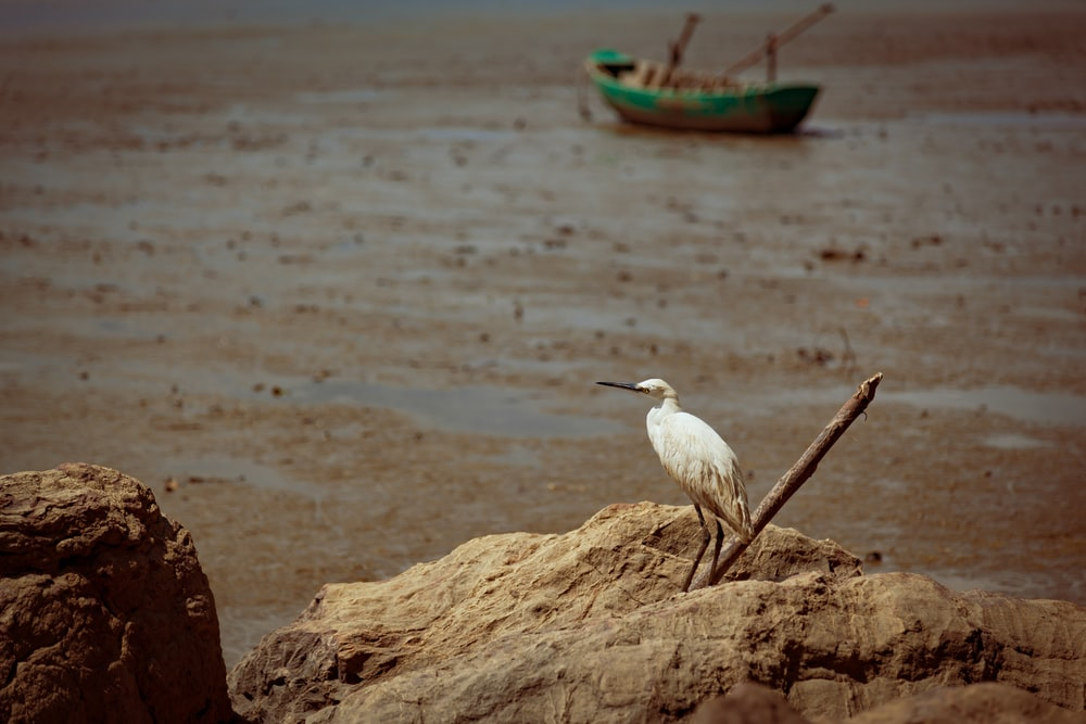 white long-beaked bird perched on brown rock