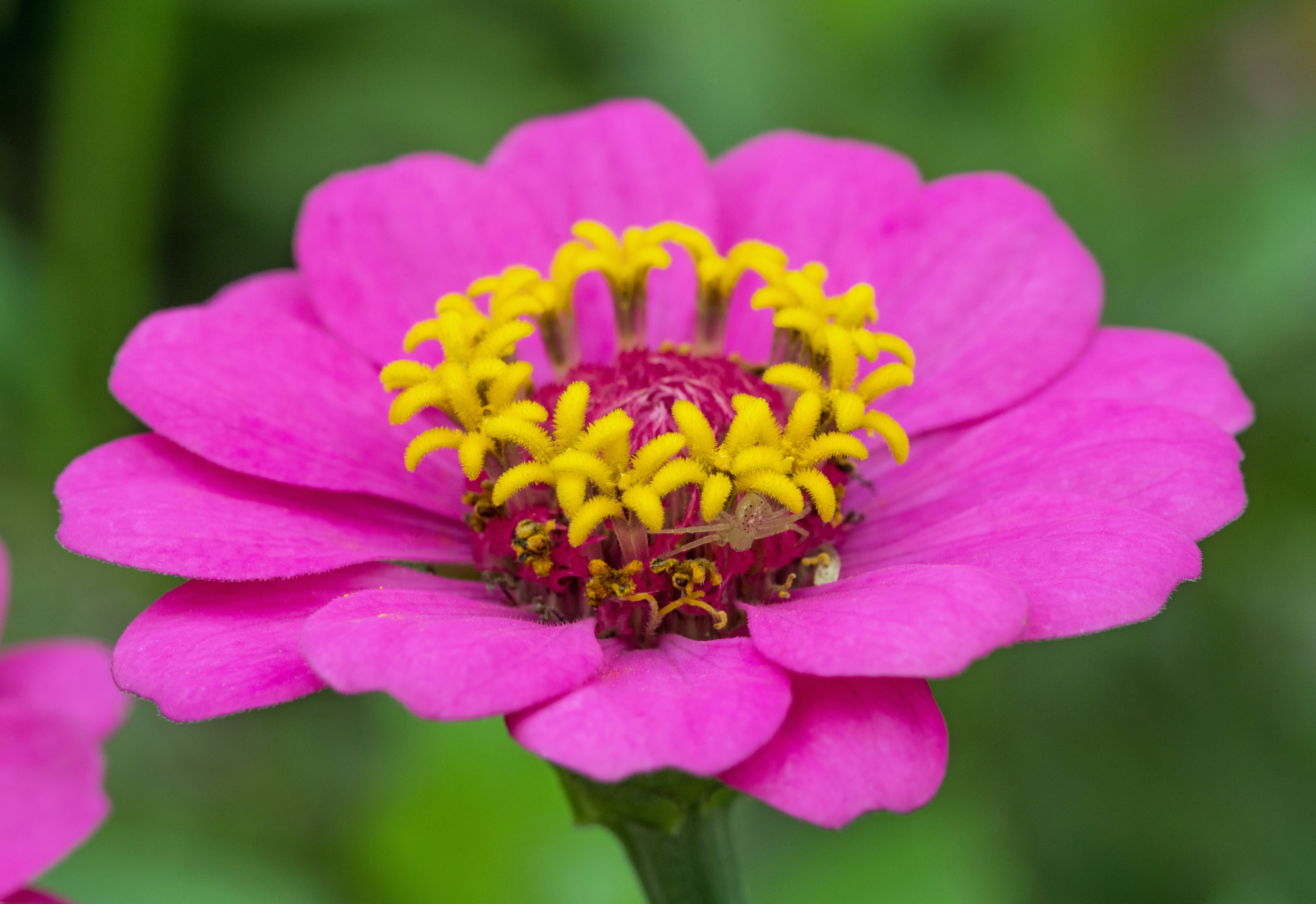 close-up photography of pink cluster petaled flower