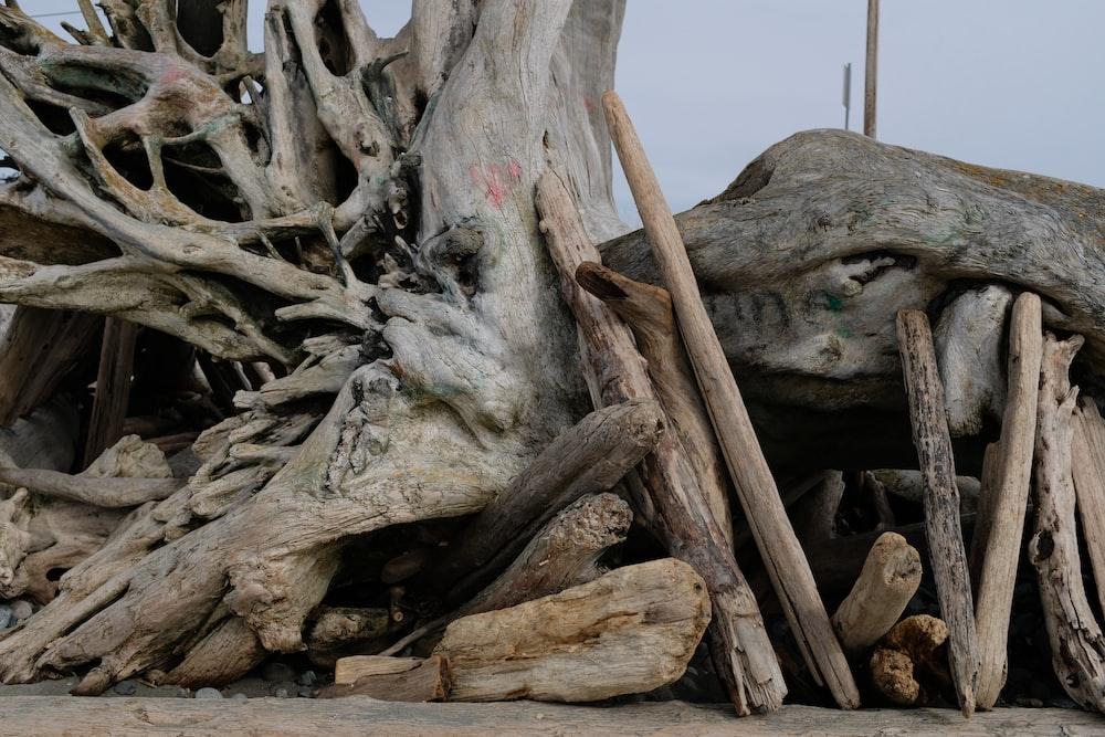 white tree trunck on the ground during daytime