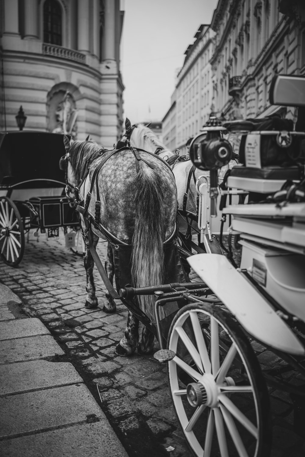 grayscale photography of horse and carriage near buildings