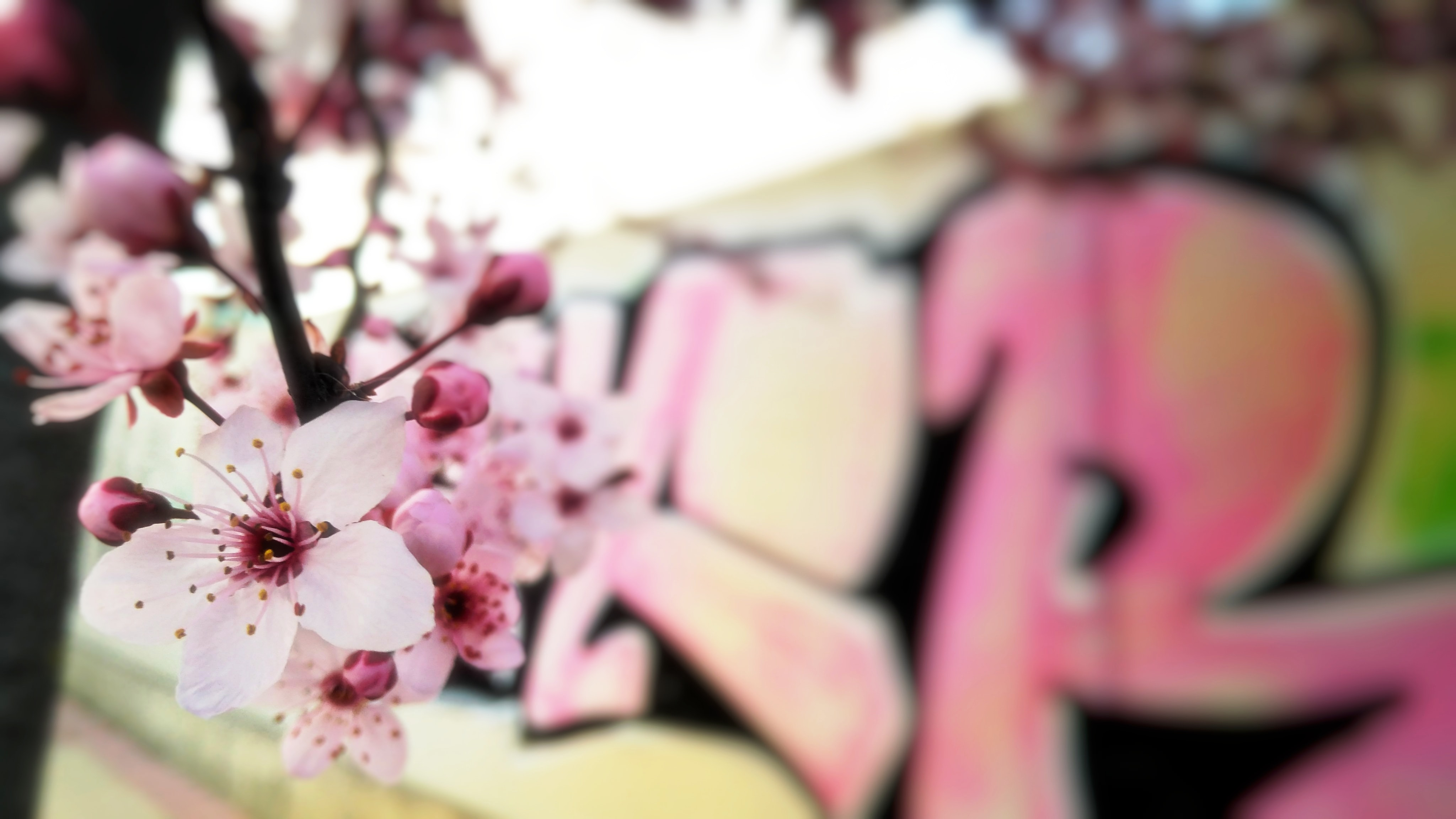 selective focus photography of cherry blossoms during daytime