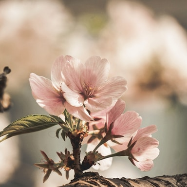 selective focus photography of blooming pink flower