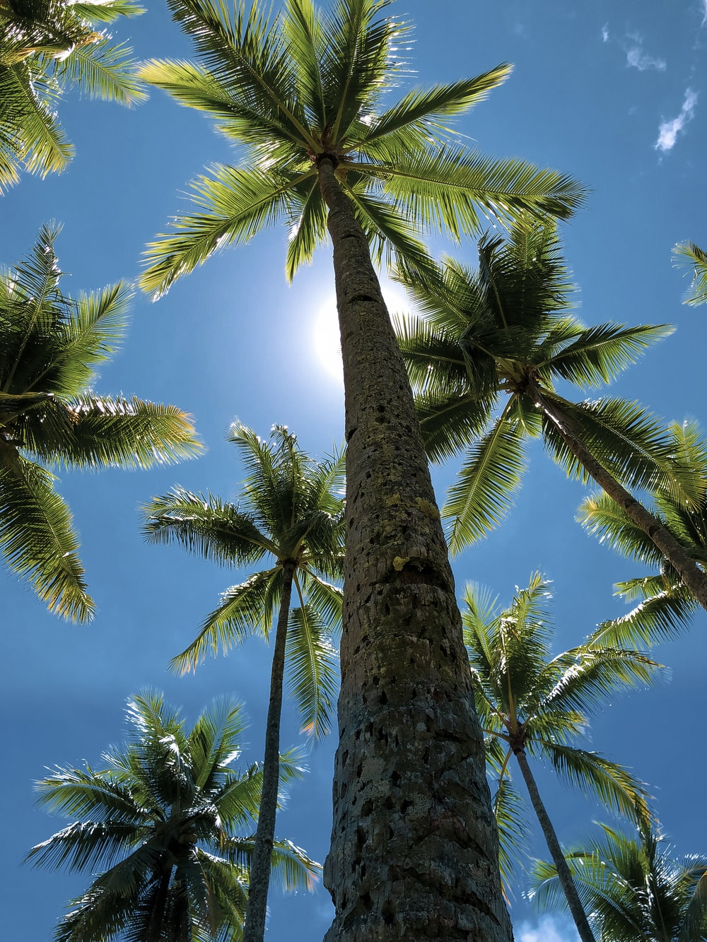low-angle view of palm trees during daytime