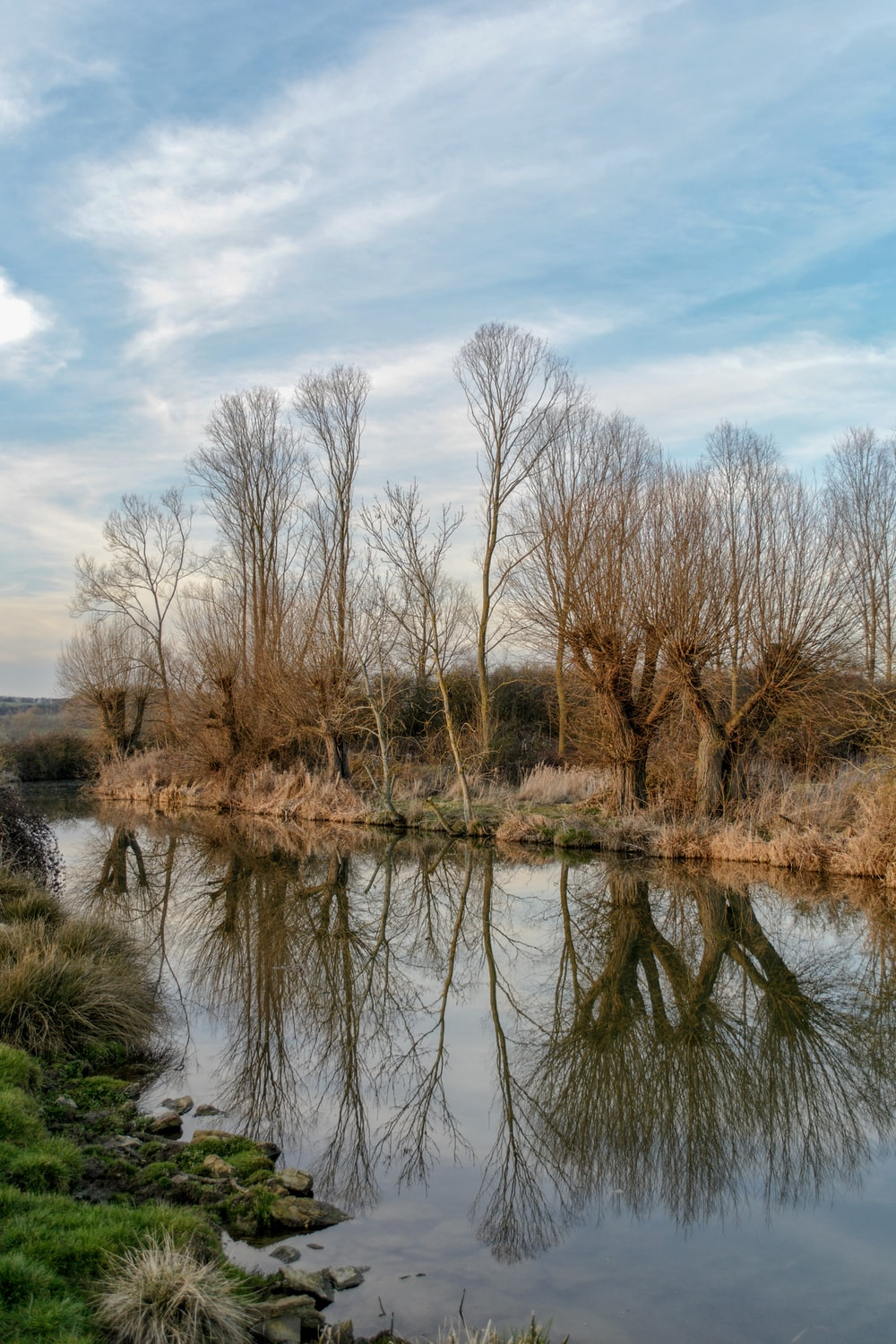 brown bare trees beside body of water during daytime