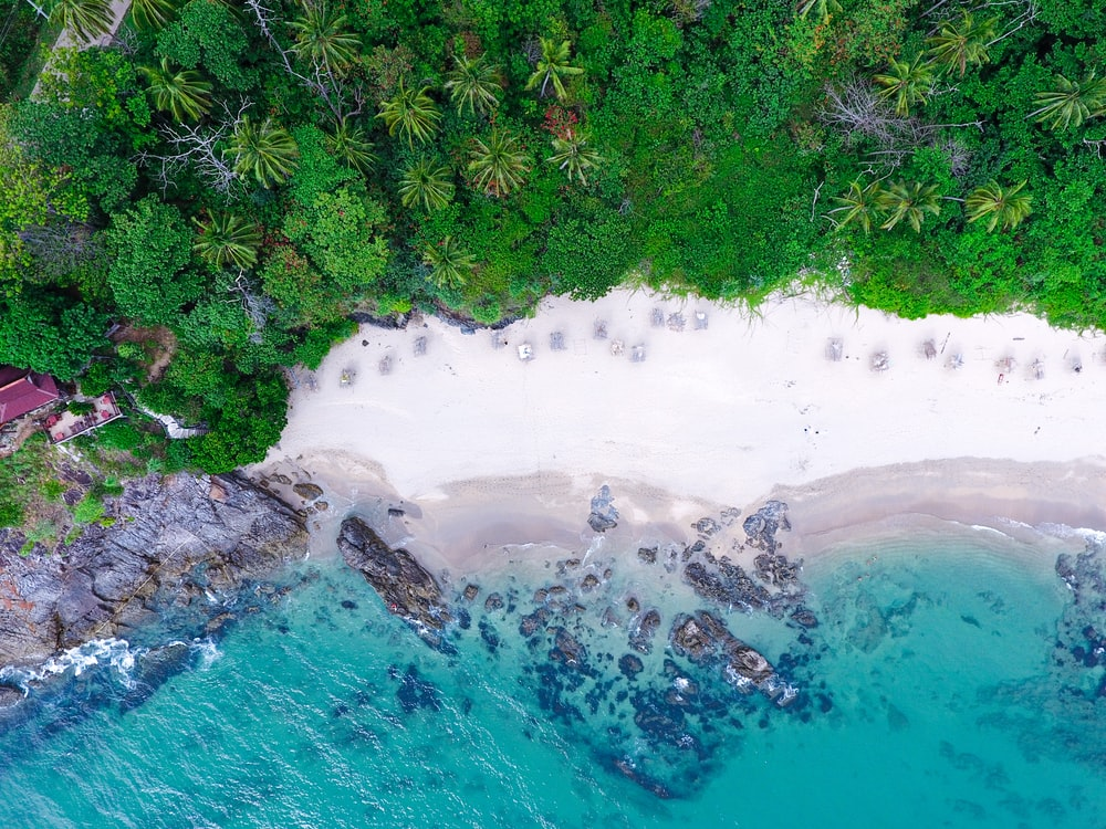 bird's-eye photography of trees near shore and body of water