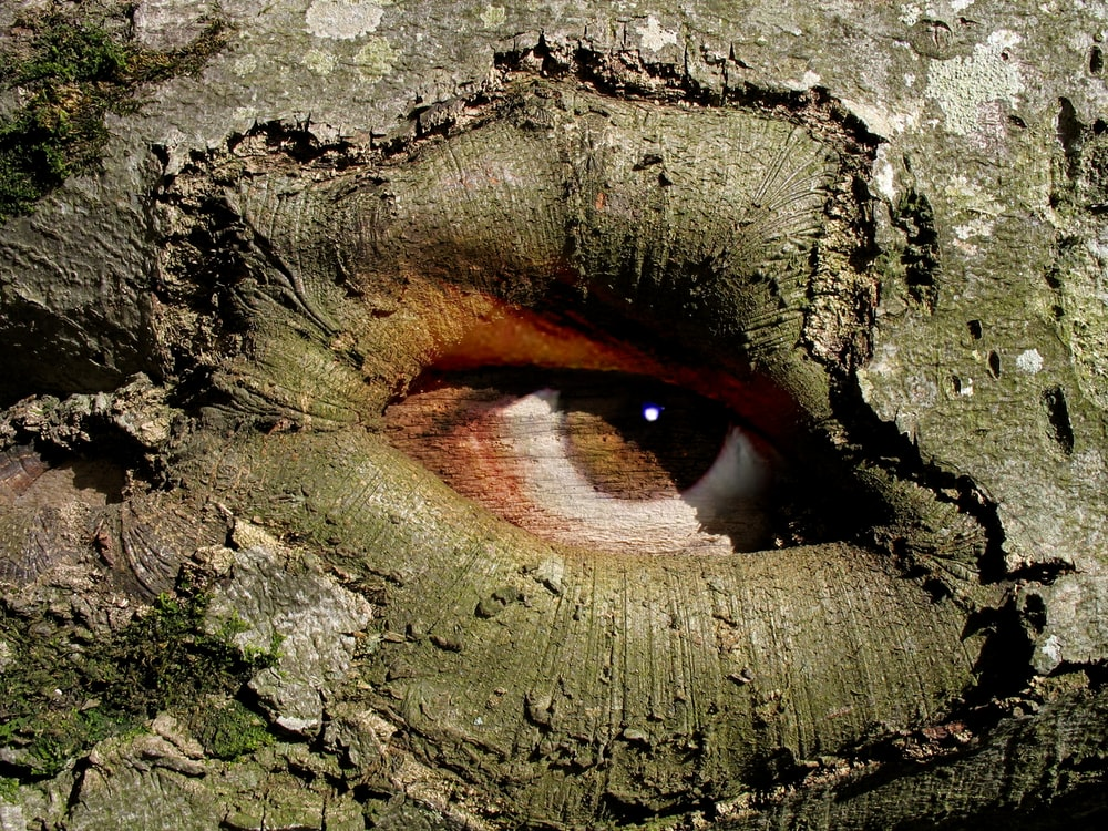 tree with painted 3D brown eye during daytime