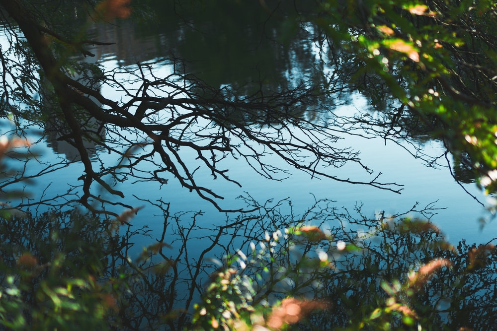 body of water near green-leafed plants