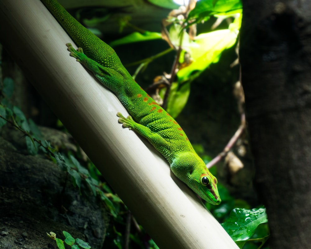 green lizard on white stick