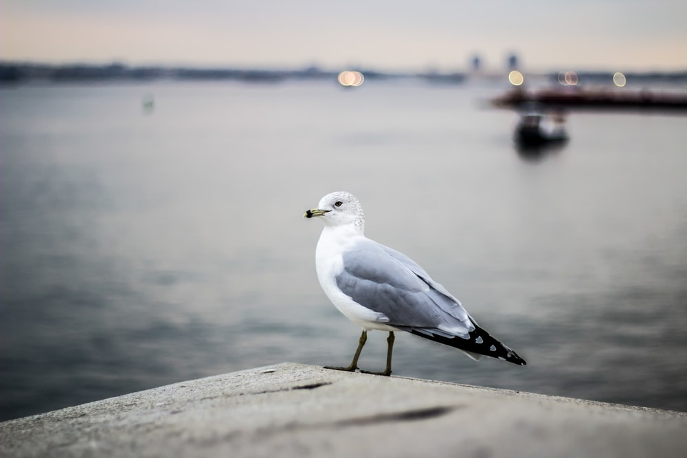 white and gray bird on gray surface