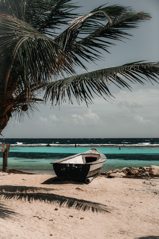 white canoe boat beside green palm tree