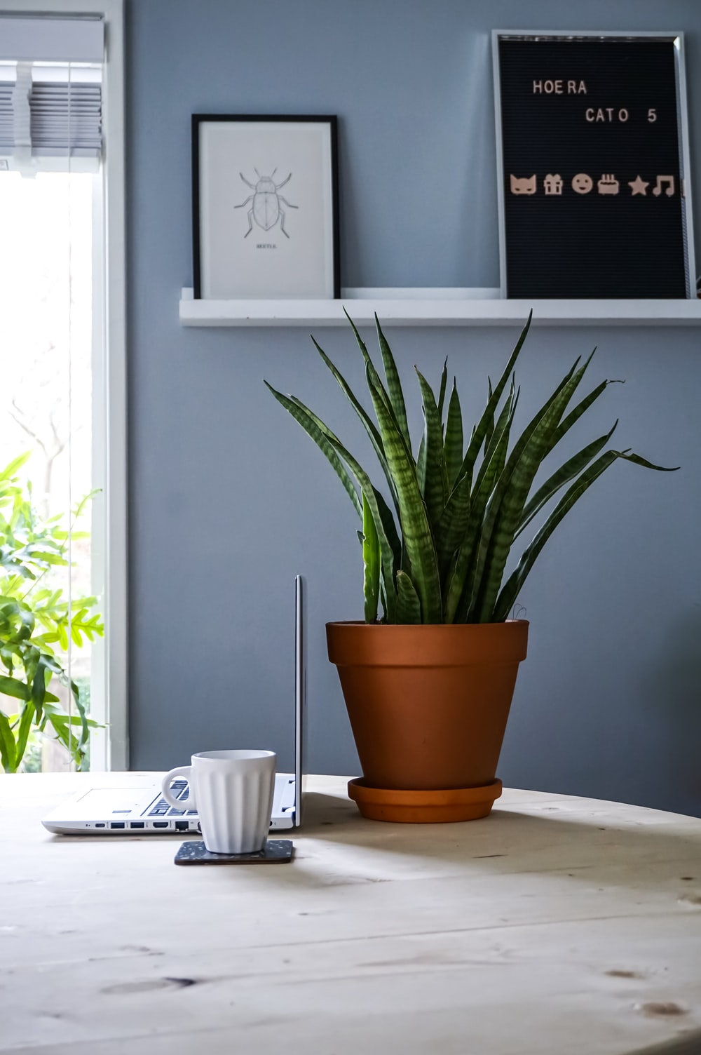 green snake plant on table