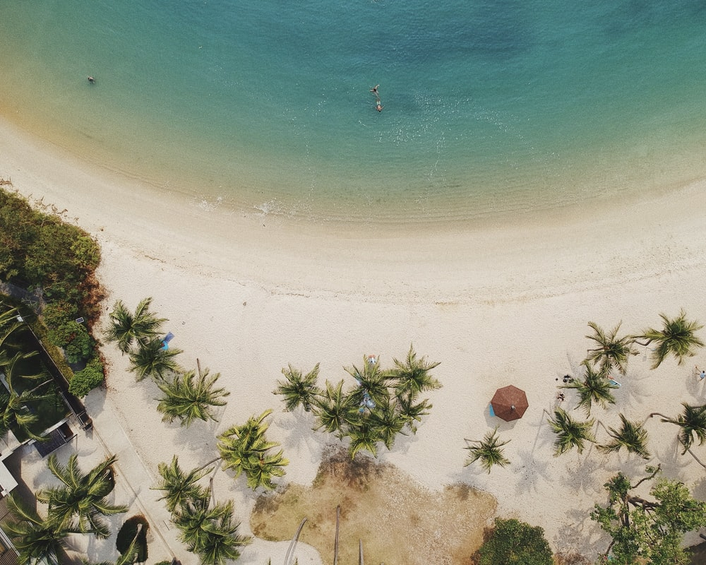 green-leafed coconut trees on beach during daytime