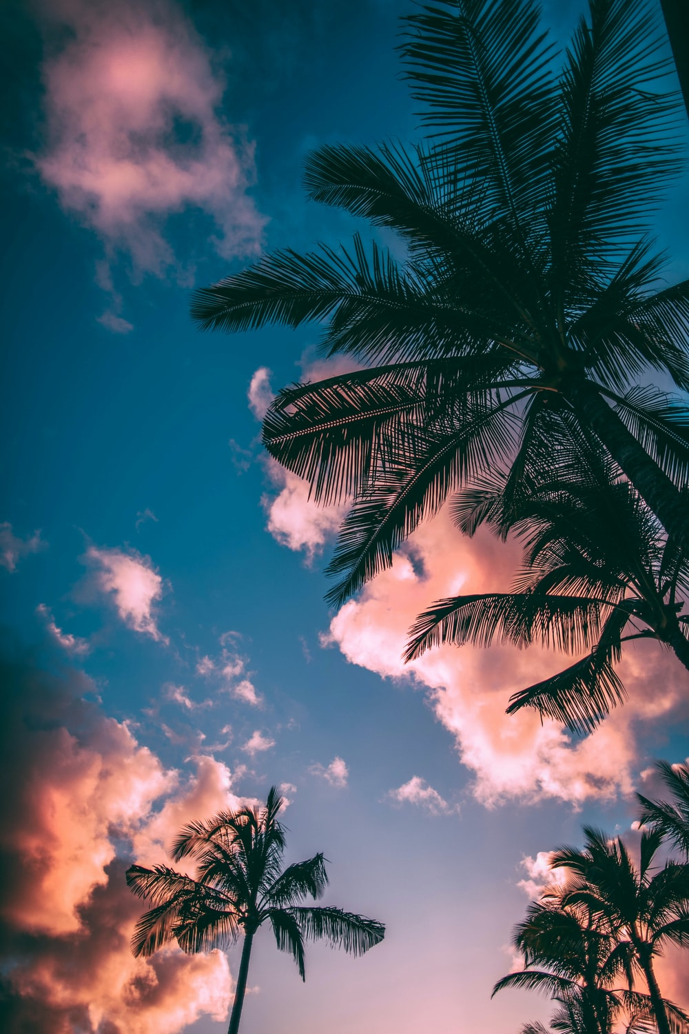 Summer Wallpapers Free Hd Download 500 Hq Unsplash