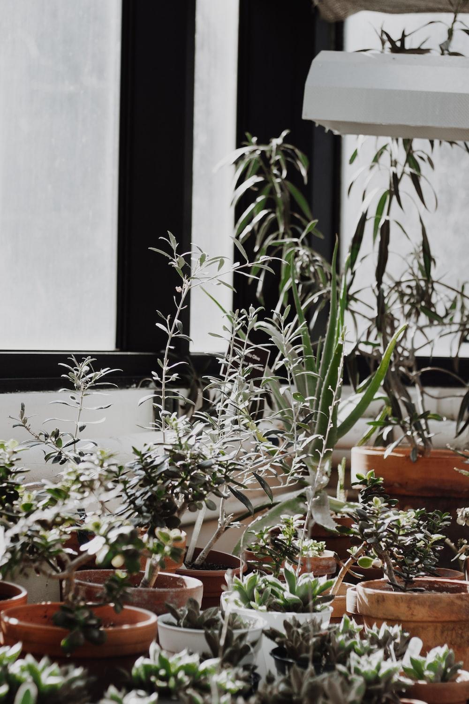 plants on brown pot