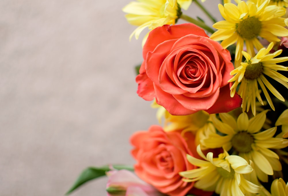 selective focus photography red and yellow petaled flowers