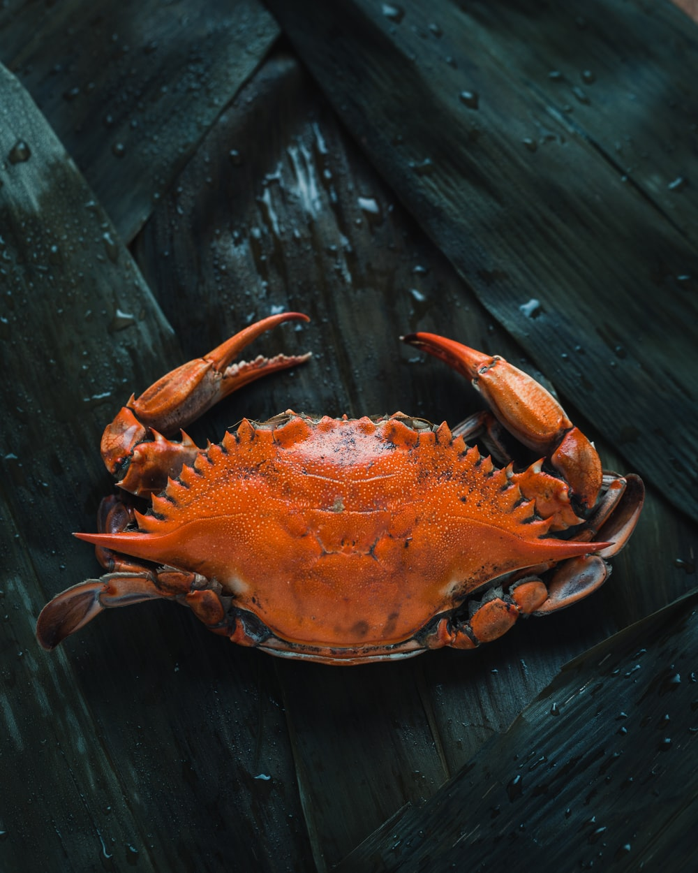 brown crab on brown surface
