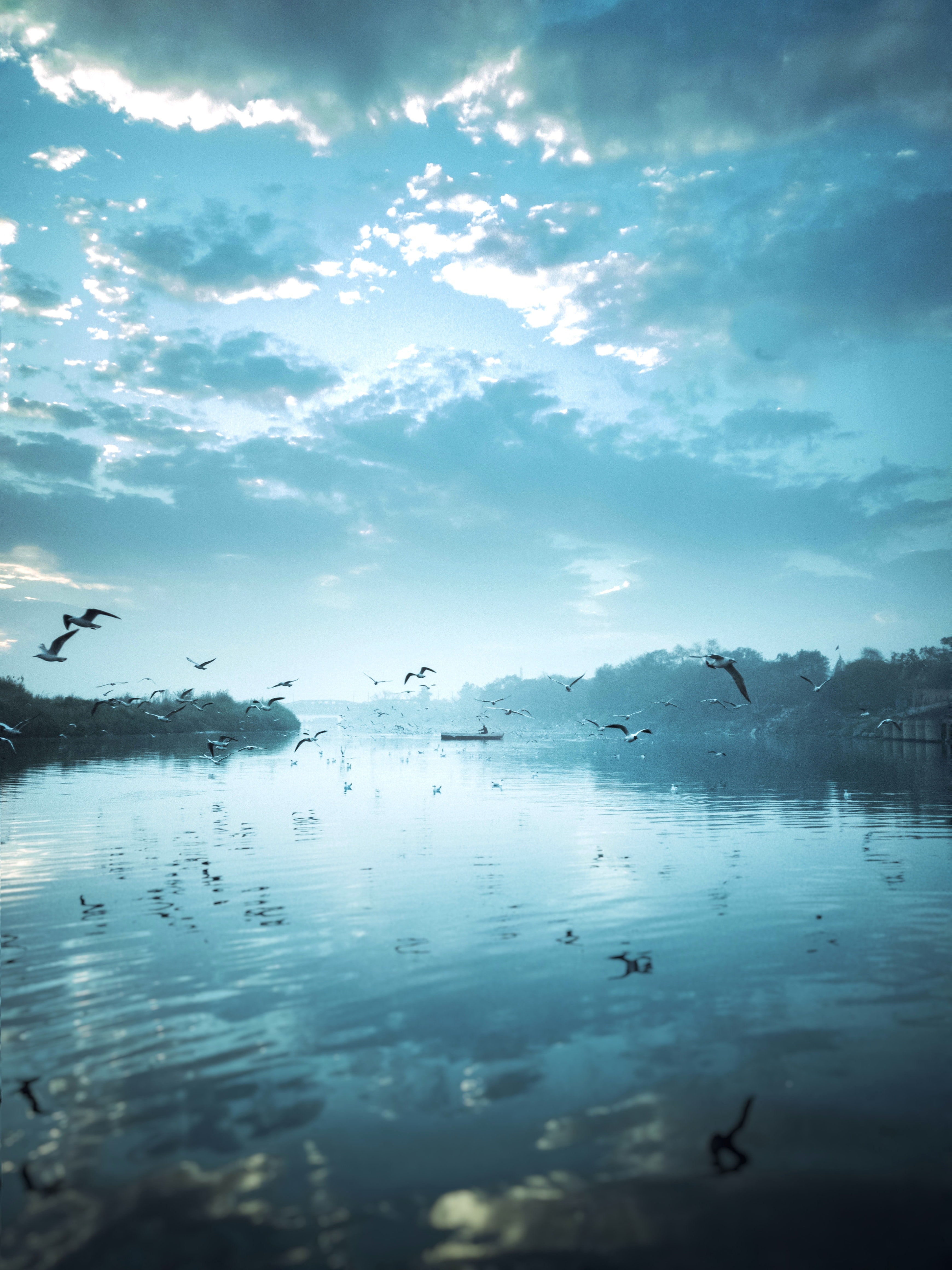 birds flying near body of water under cloudy sky during daytime