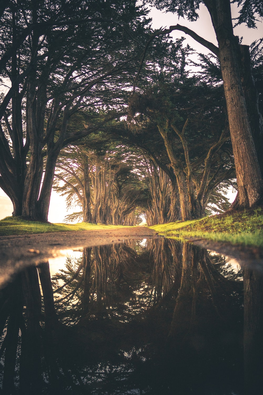 water under tree at daytime