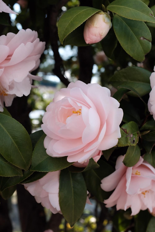 pink petaled flower at daytime