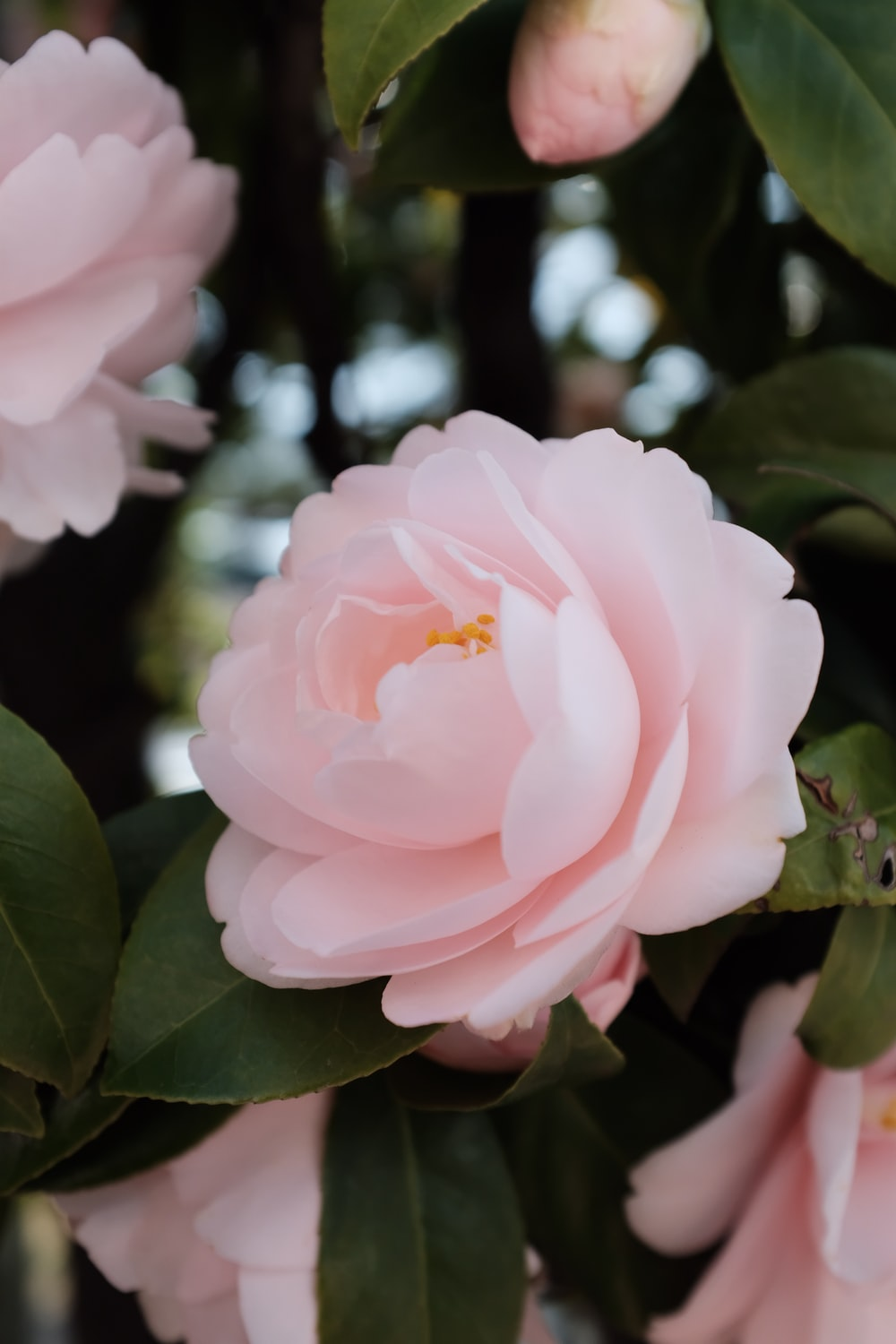 selective focus photography of pink-petaled flower