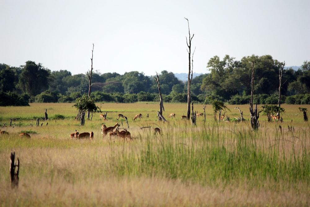 brown animals on pasture during daytime
