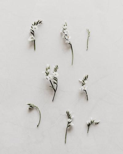 white flower decor lot
