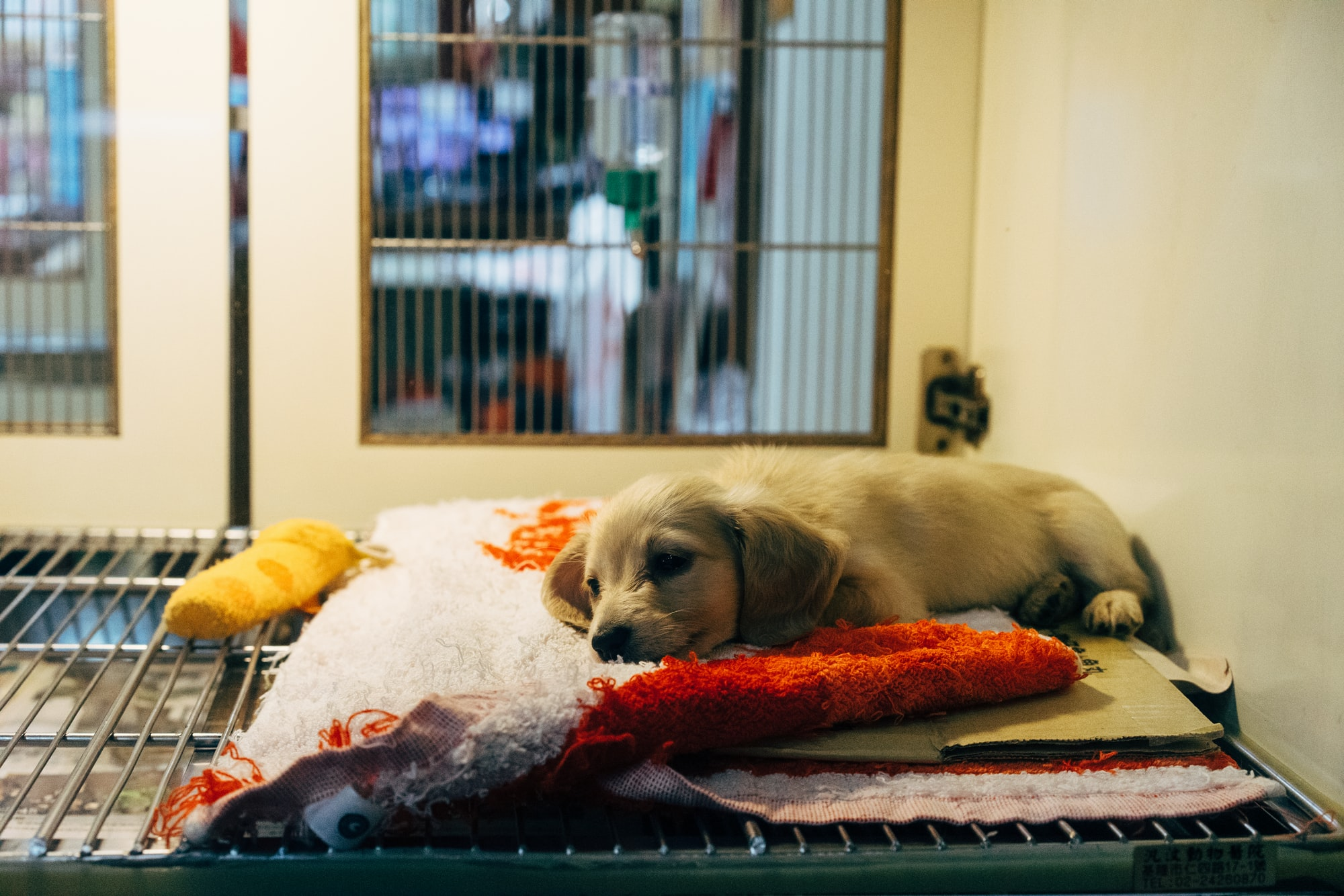 Doggy Seizures: 7 ways to keep your dog safe and calm.