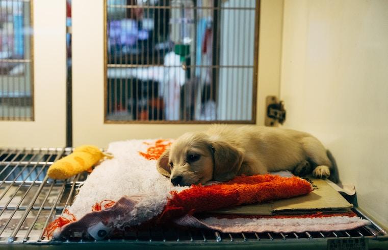 Cinema pet friendly e campanhas de adoção de animais serão realizadas no Rio