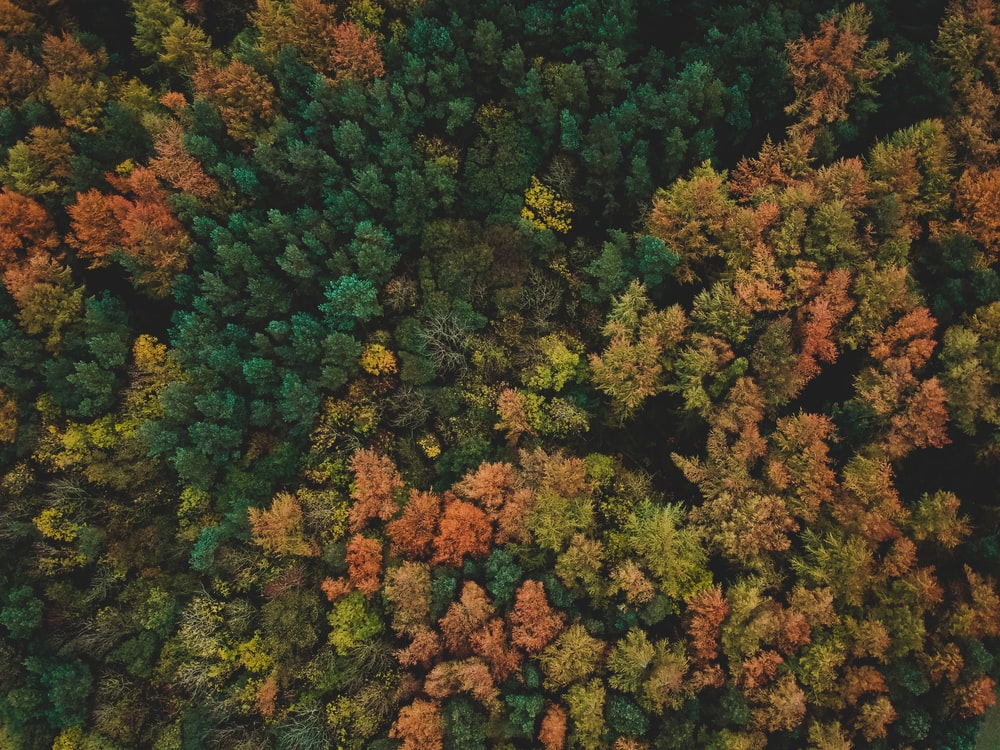 bird's-eye view photo of forest