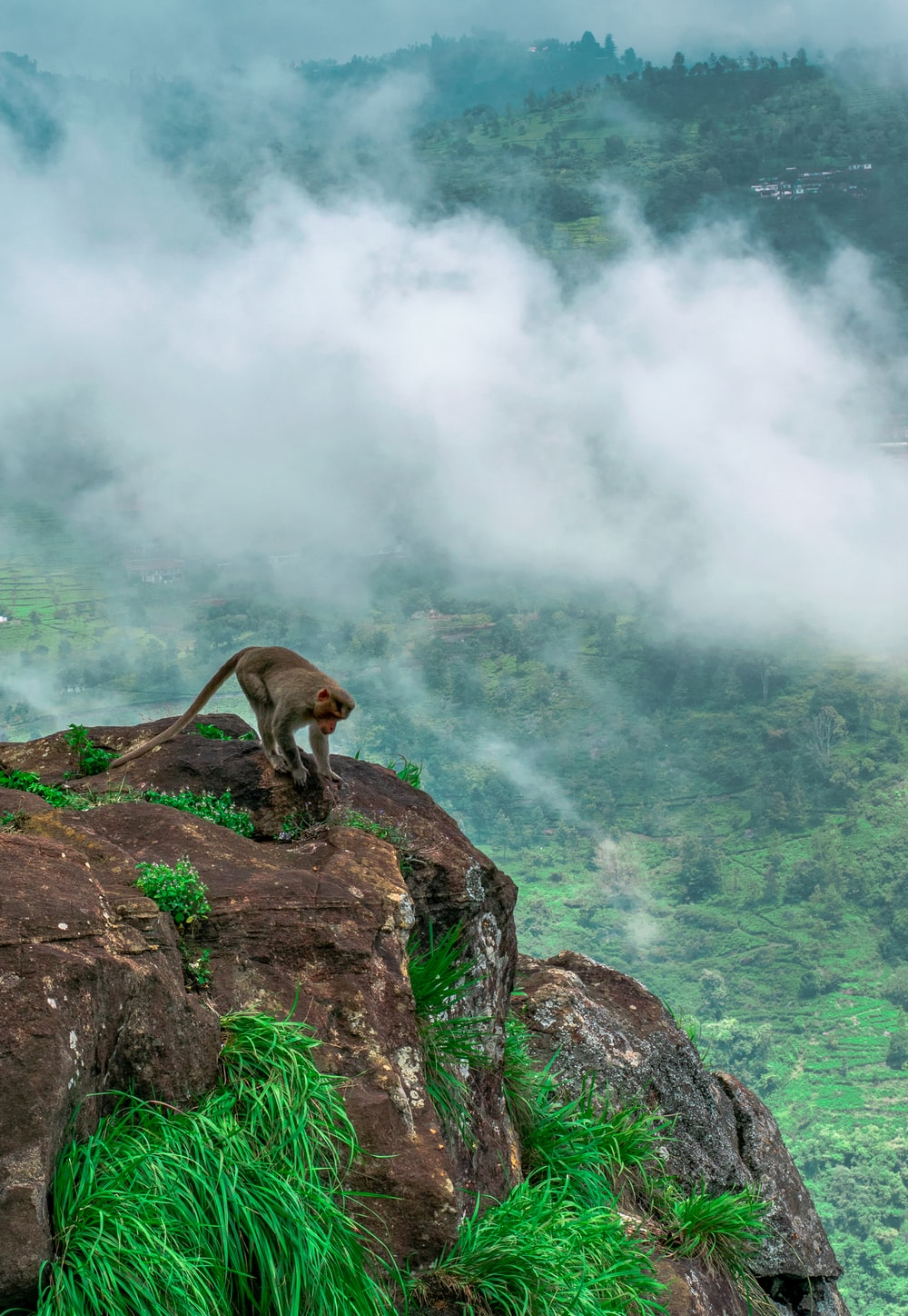 gray monkey on rock formations during daytime