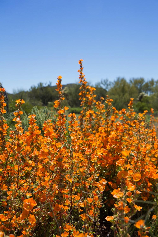 bed of orange flower