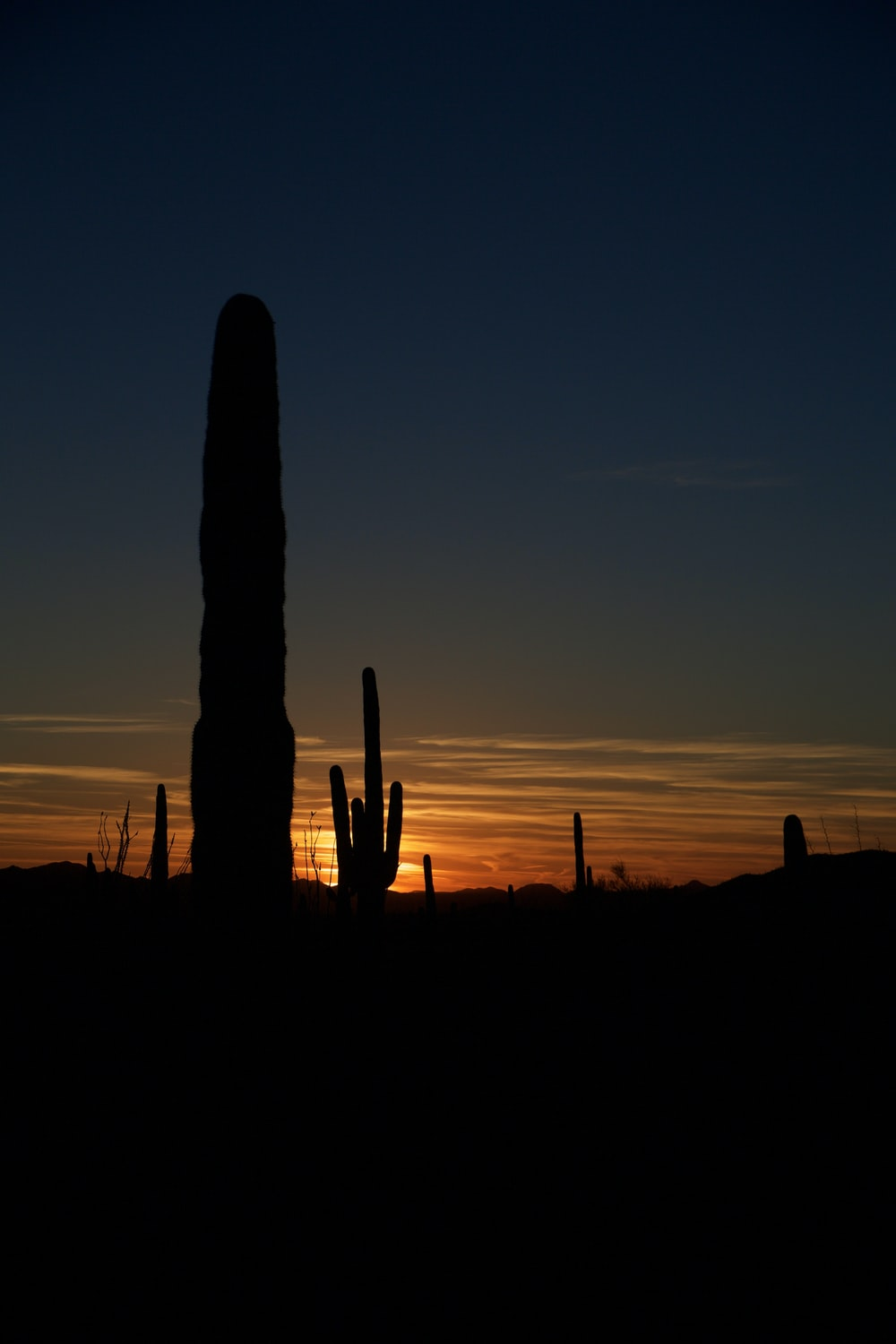 silhouette of cactus under clear blue sky during sunset