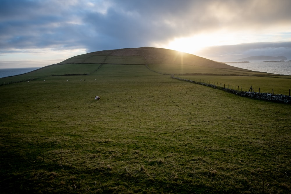green grass field hill