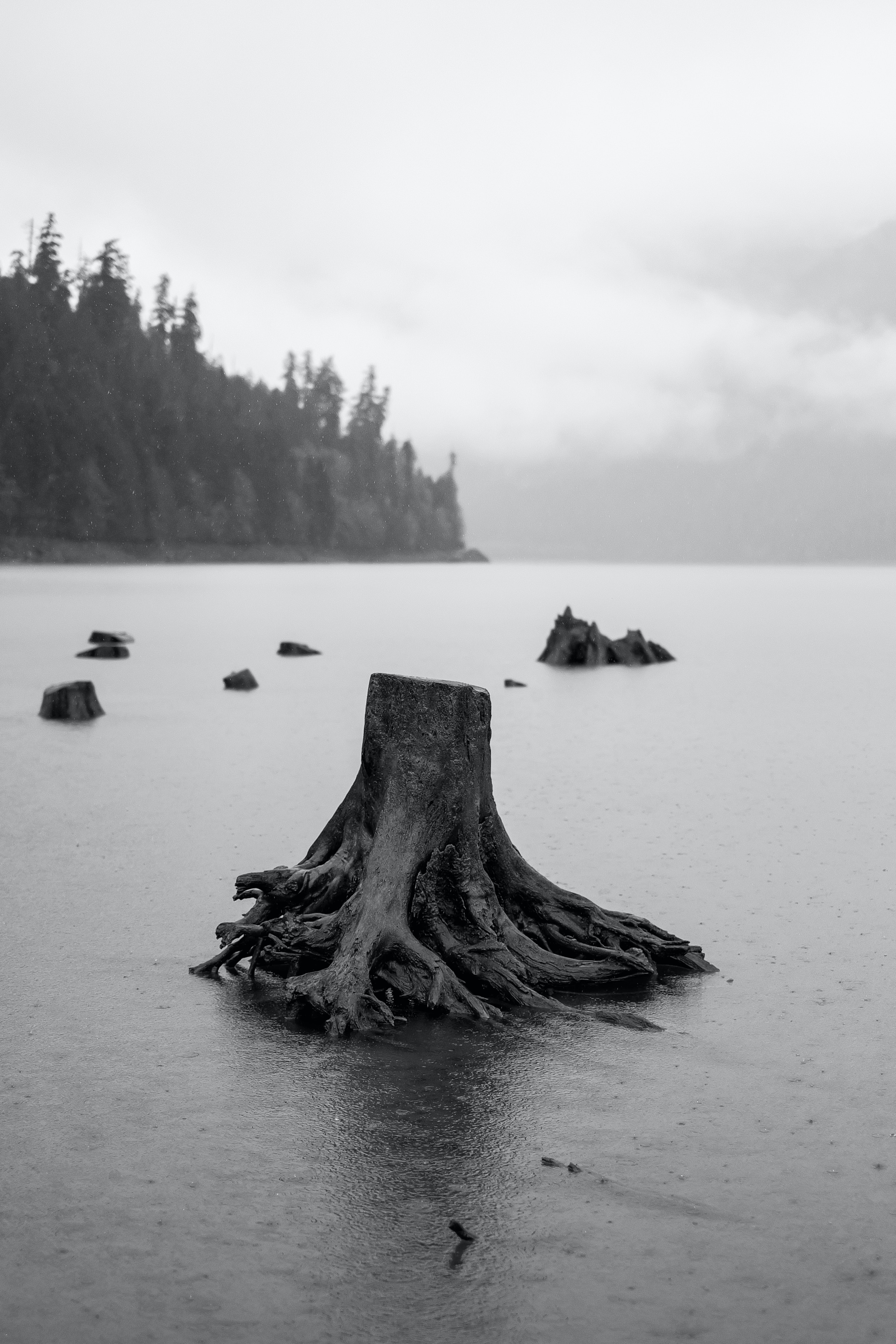 tree floating on body of water