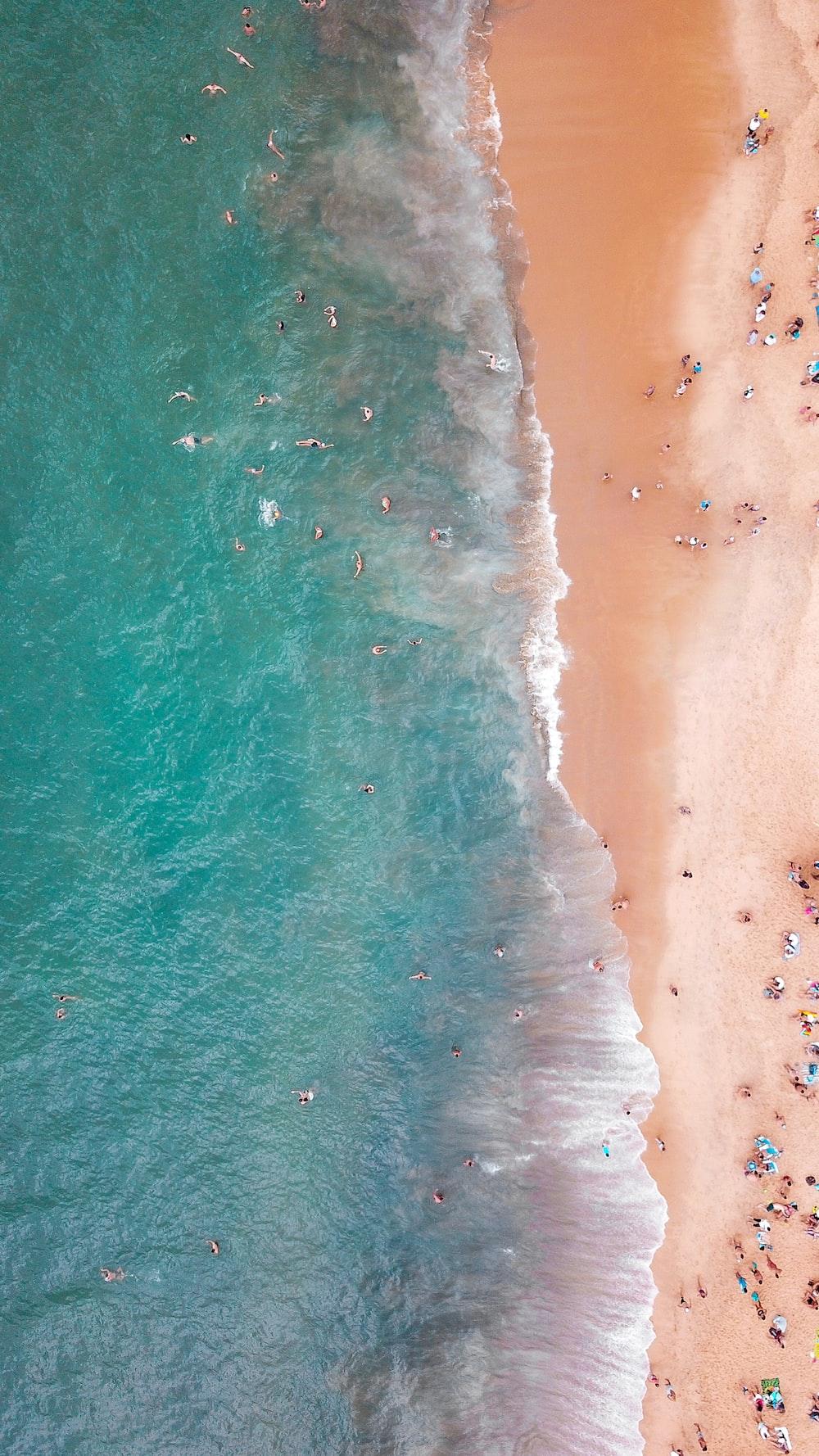 people near ocean aerial photo