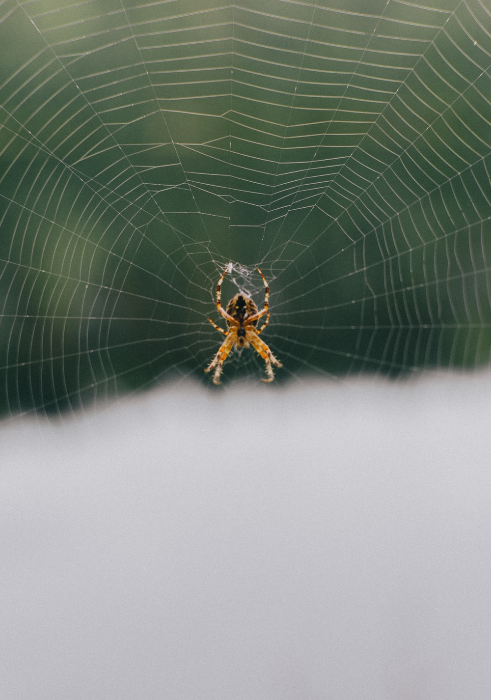 close-up photo of barn spider