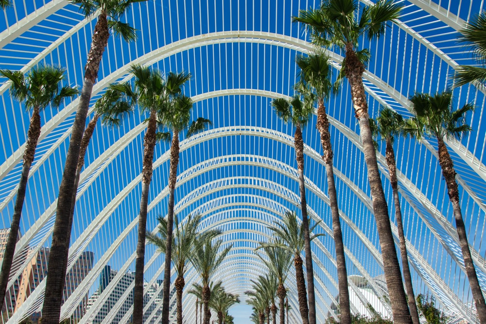 palm trees under arched structure