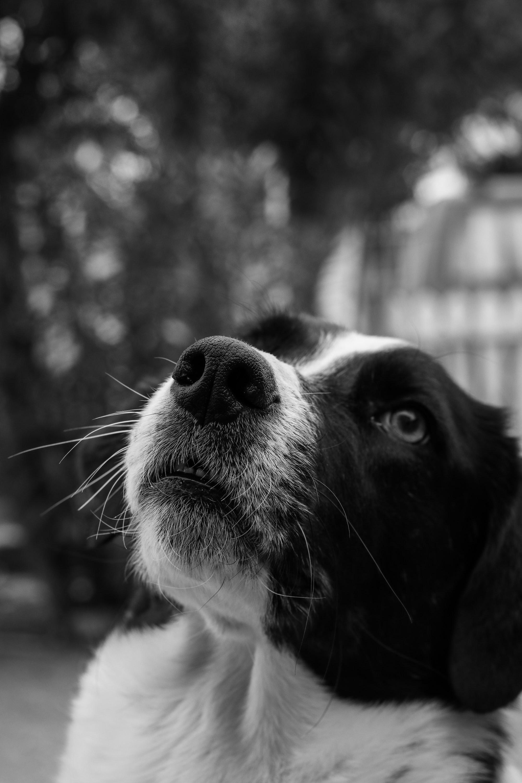Come insegnare il comando 'No' al cane