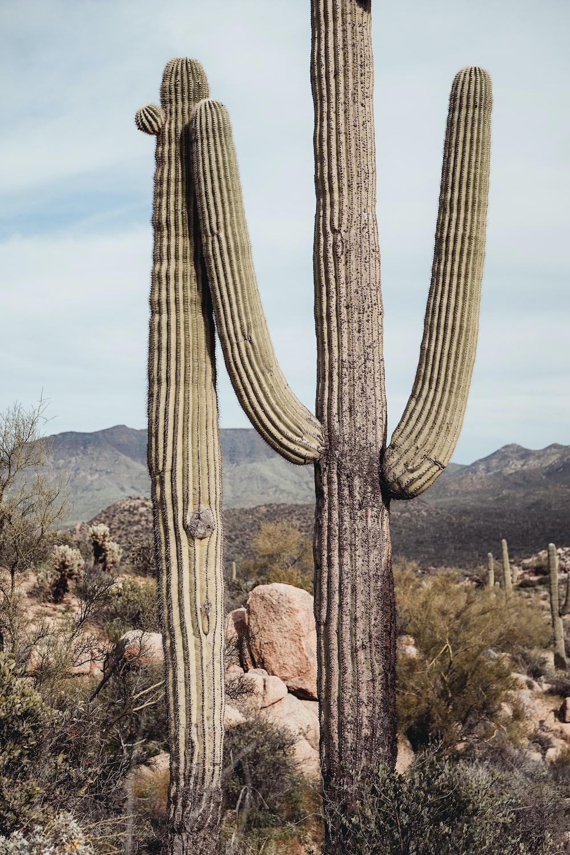 cactus near rocks