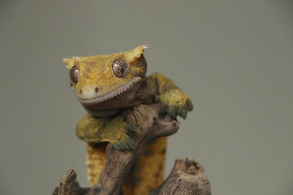 selective focus photo of beige lizard