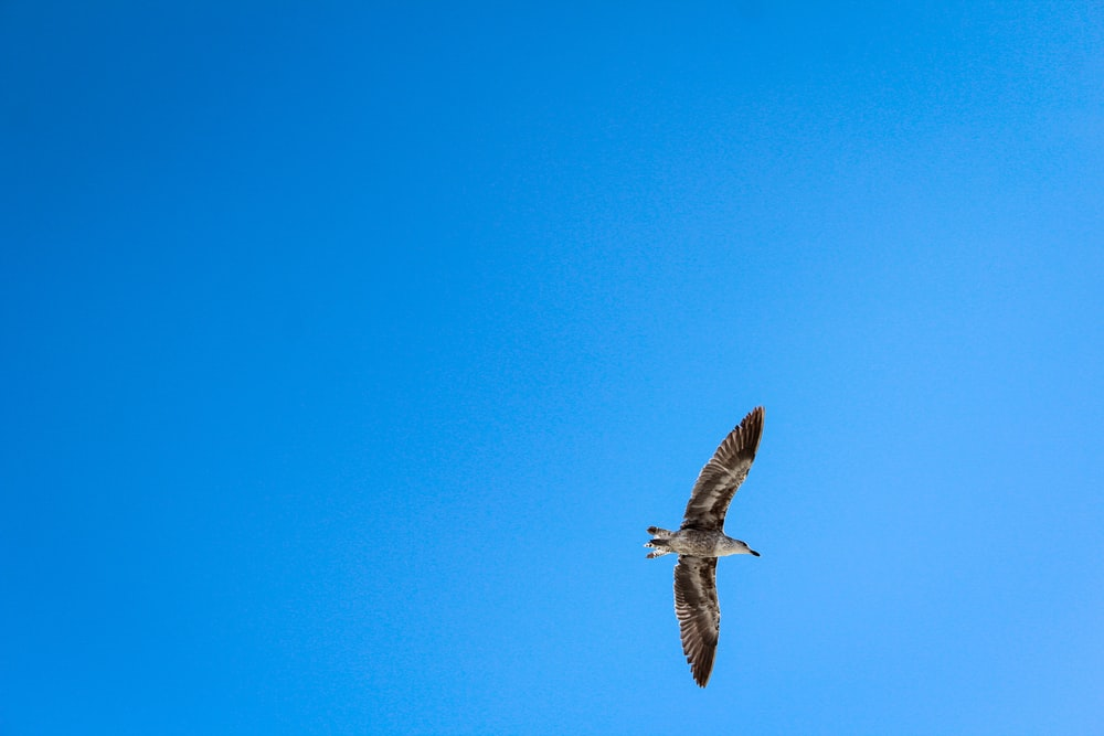 brown bird flying under blue skies at daytime